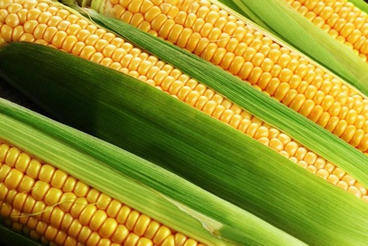 L'onnipresenza del mais negli alimenti